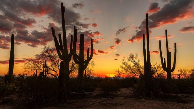 Alle Naturliebhaber und Tierfreunde aufgepasst! Phoenix für eine spezielle Riesen-Kakteenart bekannt: Saguaro. (#04)