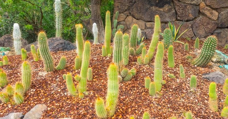 Die erste Attraktion auf meiner Liste war das Arizona Sonora Desert Museum. Dieses lag nur fünf Minuten nördlich von meinem Campingplatz. Doch im Museum erwarteten mich nicht nur getrocknete Pflanzen, tote Tiere und Steine. Das Desert Museum verfügt über ein Aquarium, einen Zoo, einen botanischen Garten und eine Ausstellung über Mineralien in der Wüste. (#03)