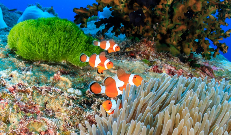 Die Similan Islands wirken wie ein aus einem wunderschönen Traum entsprungen. Türkisblaues Wasser, feine Strände und fantastische Stein- und Felsformationen werden mit der Insel-Flora zu einem blau-grünen Juwel in der Andamanensee.